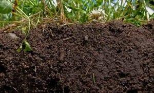 Living soils_Photo Credit nrcs.usda.gov