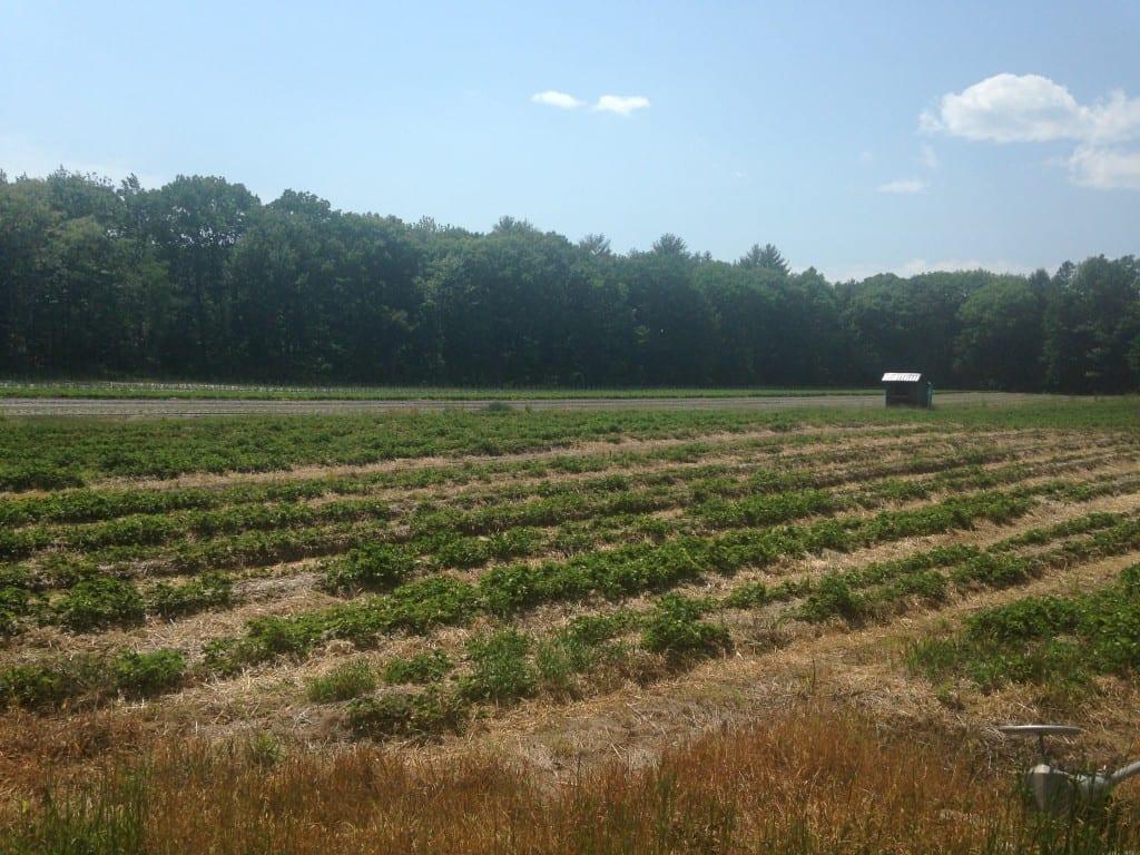 Belanger Farm Tour_06.11.15 (9)